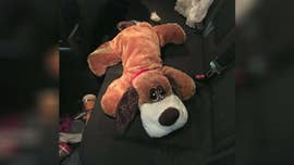 The keen nose of a dog with the U.S. Customs and Border Protection discovered last week a stuffed animal in the back of a car was no play toy.
