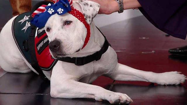 Hero Dog Awards winners share their stories