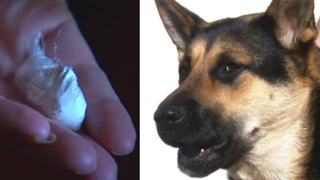 Service dog makes disturbing discovery in family's yard