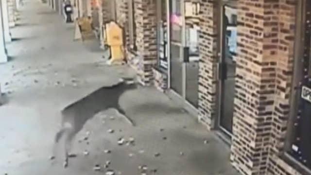 Deer crashes through barbershop's glass door
