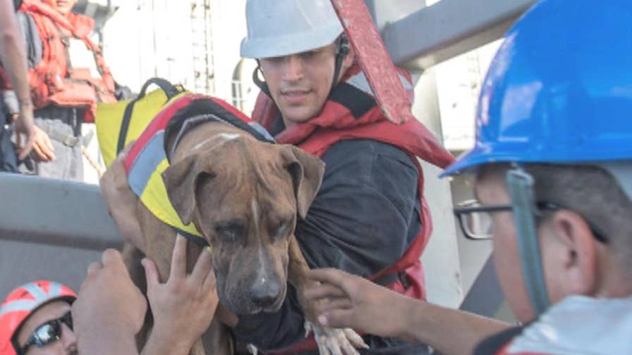Hawaiian mariners Jennifer Appel and Tasha Fuiaba and their two dogs were rescued Wednesday after their sailboat strayed well off course during a trip to Tahiti.
