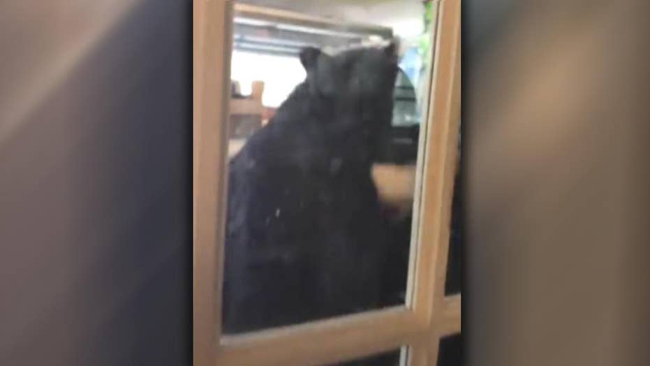 Bear gives homeowner quite a scare in Florida