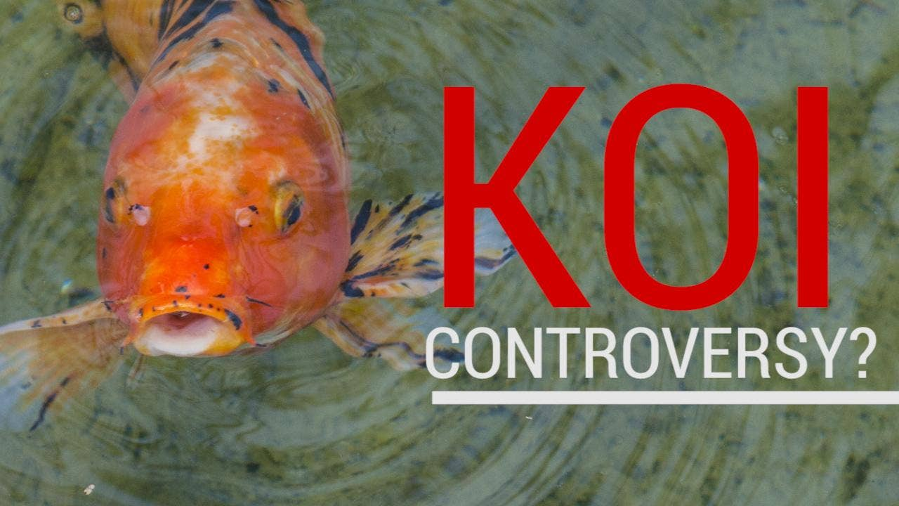 anti trump media makes up fake story about overfeeding fish at