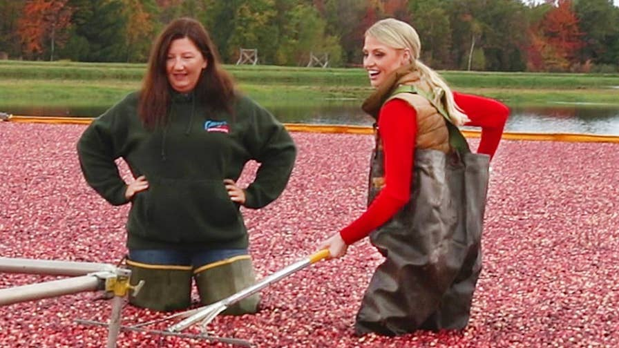 Carley Shimkus does a deep dive on Wisconsin's OTHER big food export - cranberries - on this episode of 'Odd Jobs.'  What's it like to go waist deep working in a cranberry bed and what makes these Midwest fruit farmers tick?  'Odd Jobs' takes a fresh look at the weird, wild, and wonderful jobs that folks across the country are doing to earn a paycheck, and live their American dreams.