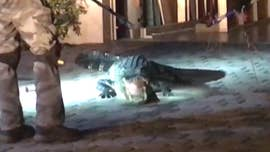 "A ""monster"" alligator was captured Saturday night after wildlife officials lured the 8-foot reptile out of a Florida home's garage."