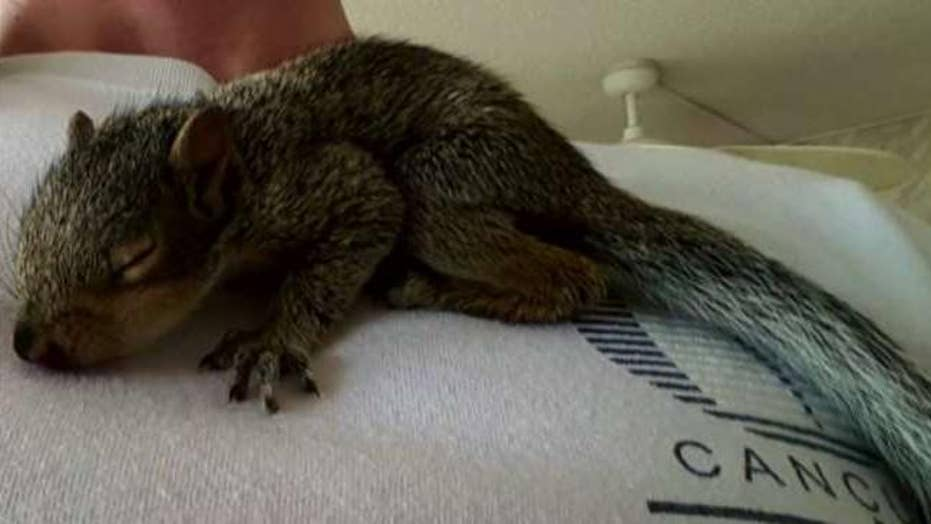 Man facing eviction over support squirrel