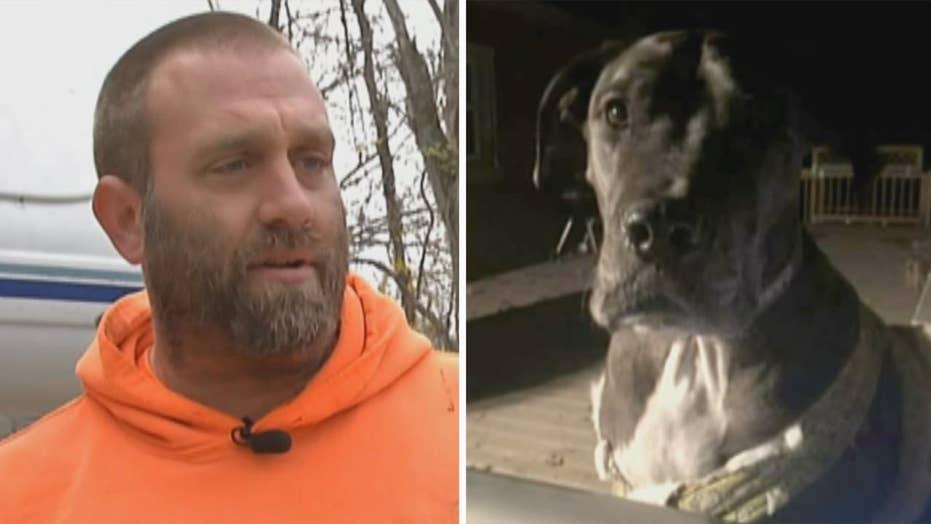 Armed homeowner's Great Dane helps subdue intruder