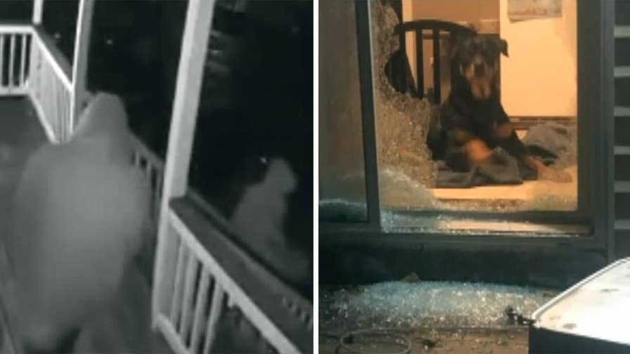 Worcester, Massachusetts woman devastated she can't afford cancer surgery for her beloved pup after smash and grab suspects targeted her home.