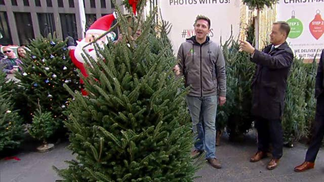 After the Show Show: Christmas trees