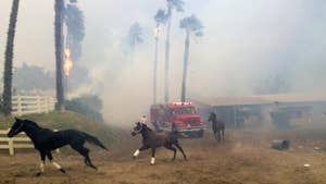 About 25 horses die after California's Lilac fire sweeps through San Luis Rey Downs training site.