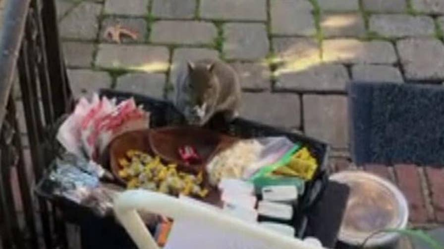Raw video: A furry thief makes off with gourmet chocolate a family left as a gift for their mail carrier.
