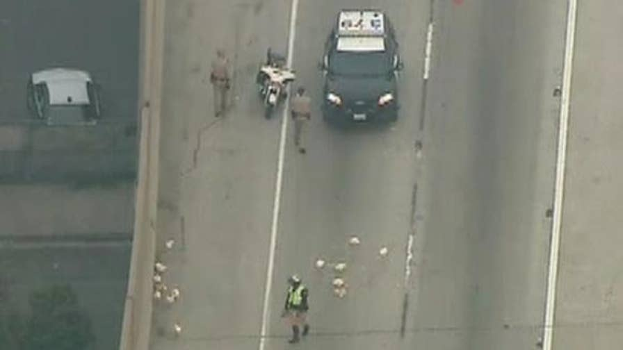 Raw video shows chickens being removed from the road after blocking traffic.