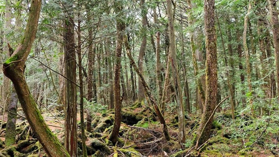 'Suicide Forest': Reason behind Japanese forest's moniker