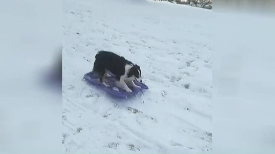 Dog enjoys the snowy weather