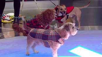 'Fox & Friends' shares a look at some gear for dogs from BarkShop.