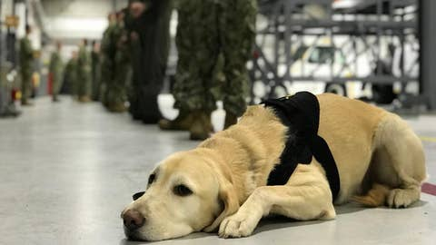 Navy base uses stress dog to prevent suicide among its ranks