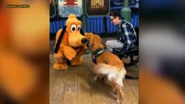 The Golden Retriever got to meet a life-size version of his favorite toy.