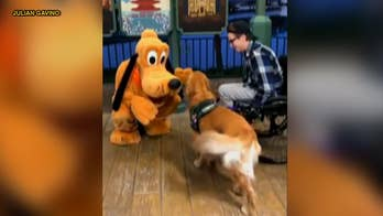 Service dog, Atlas, had a magical experience on a recent trip to Walt Disney World after meeting his favorite character, Pluto, and video of the encounter has gone viral.