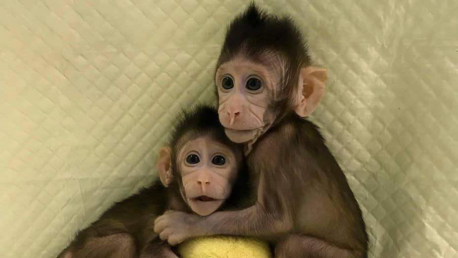 Monkeys cloned for the first time
