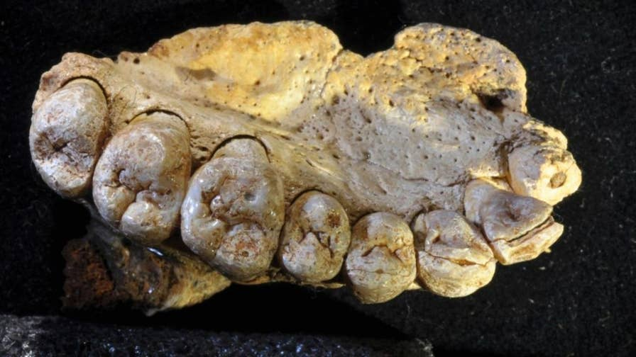 An international team of researchers has discovered the earliest modern human fossil outside of Africa. The fossil, an upper jawbone with several teeth, was found at Misliya Cave, one of a number of prehistoric caves on Mt. Carmel in northern Israel. Dated to between 175,000 and 200,000 years ago, the jawbone indicates that modern humans left the continent of Africa at least 50,000 years earlier than previously thought.