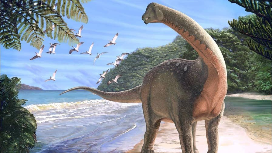 A school-bus sized dinosaur called Mansourasaurus shahinae has been discovered in Egypt's Sahara desert, marking an important prehistoric link between Africa and Europe.