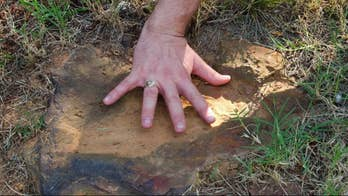 Paleontologists excited by discovery of about 70 tracks from the Cretaceous period.