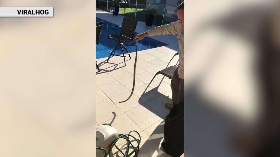 Super deadly snake caught lurking inside garden hose reel