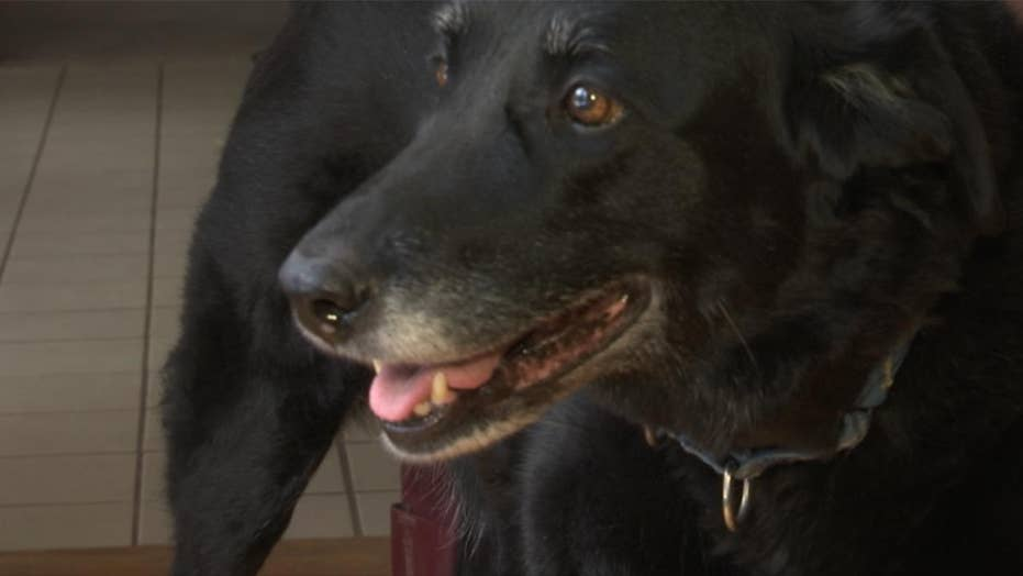 Lost Pennsylvania dog found 10 years later