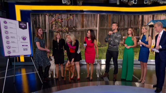 After the Show Show: Westminster Dog Show