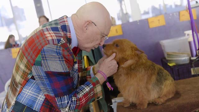 Making of a Westminster champion dog