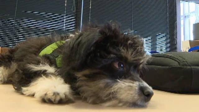 Dog serves as 'hospitality director' of high school