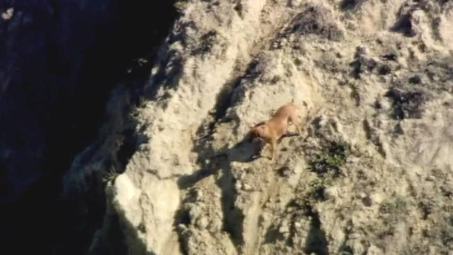 Man falls off cliff trying to rescue his dog