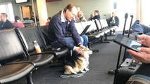 Cora, a therapy dog in training sought out a man at the airport who'd lost his own pet the day before.