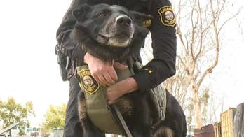 The San Joaquin Sheriff's Department in California is getting some big donations for protective vests for members of their K9 unit.