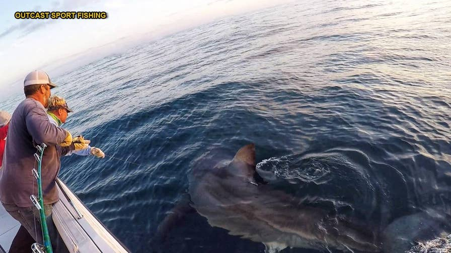 Two fishermen in Hilton Head, S.C., managed to hook two Great White Sharks - including one 16-footer - within just 10 minutes of each other.