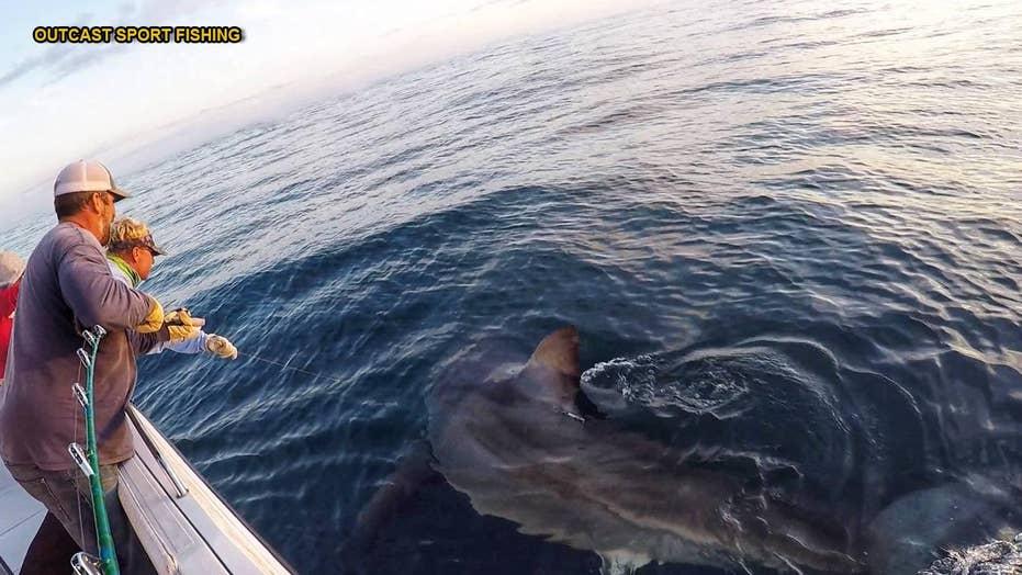 Dramatic video: Fishermen catch 16-foot shark