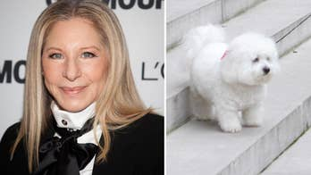 Barbra Streisand flew her dogs 10,000 miles to watch her perform in London