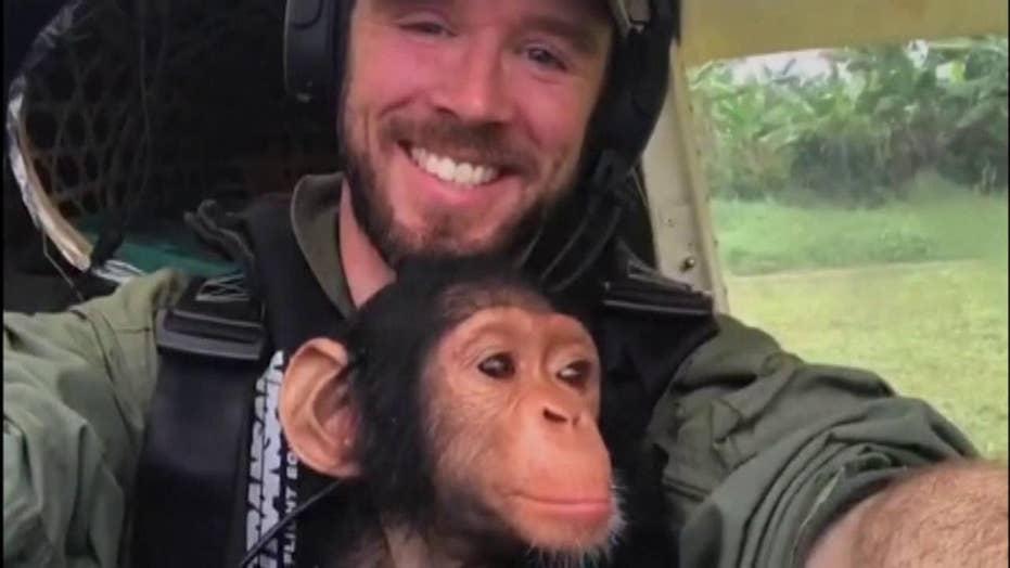 Anti-poaching pilot flies baby chimpanzee to safety