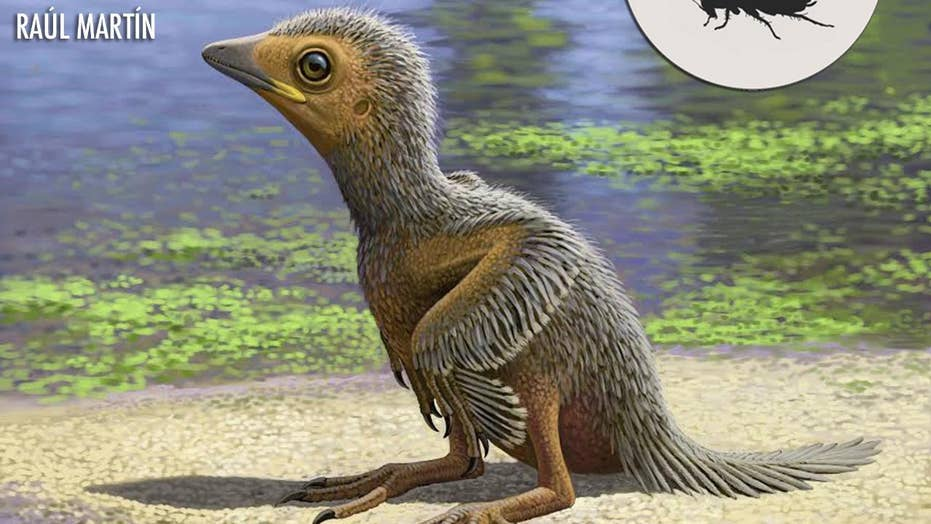 Baby bird fossil found that could shed light on evolution