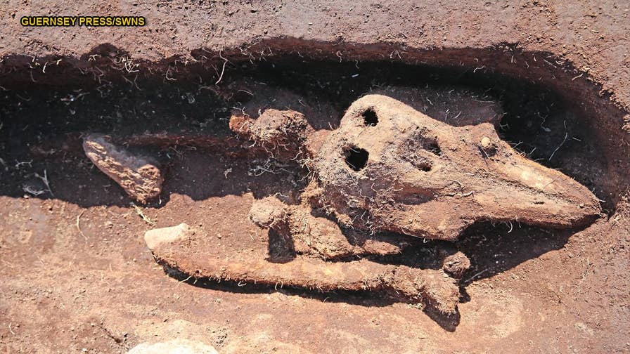 A bizarre discovery stumped archaeologists when they found skeletal remnants of a juvenile porpoise, thought to date from the 13th century. The mammal was commonly eaten in the medieval times, which is why archaeologists can't understand why it was given a burial.