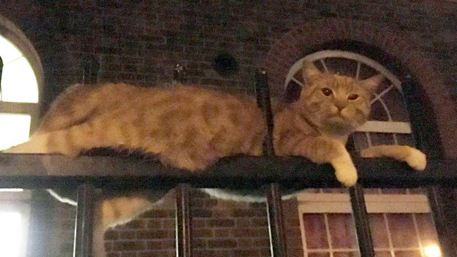 Warning - This video contains graphic images. A happy ending for Skittles, the cat who was impaled on two fence posts in London. He has returned home to his owner.