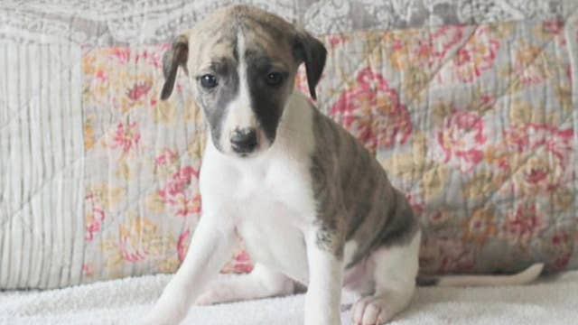 Delta sends puppy to wrong location on cross-country trip