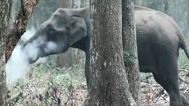 Incredible footage of an elephant picking up ash with its trunk and breathing smoke has been captured, stunning onlookers and experts.