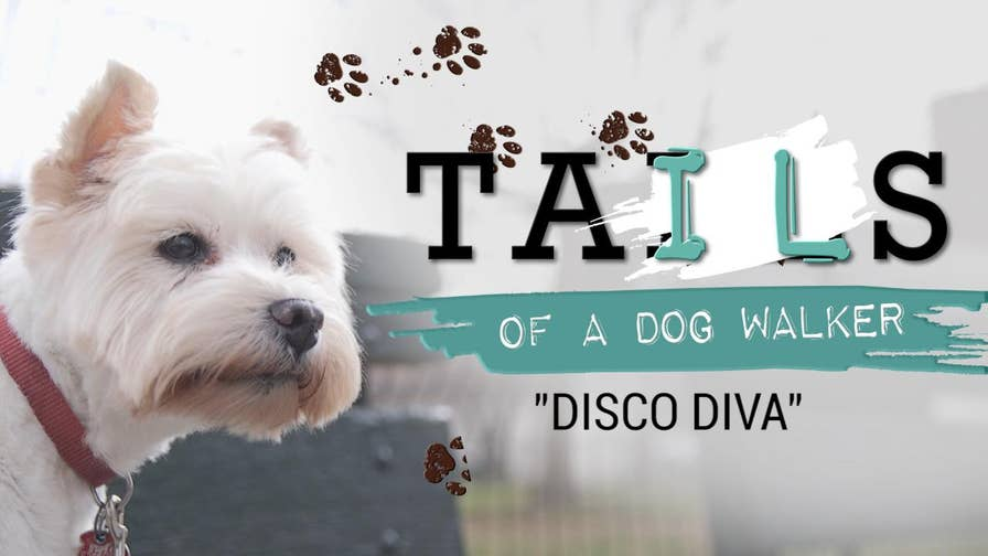 """Often the unsung heroes of neighborhoods nationwide, there are over 28,500 dog walkers in United States. FOX News hit the streets with some of the best walkers in the business to hear some of the funniest, strangest and down-right silly stories in a brand new web series, """"Tails of a Dog Walker."""" In this episode meet Aretha, a disco diva."""