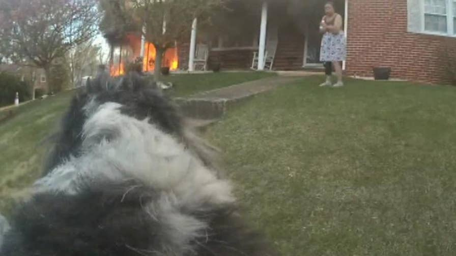 Body cam footage shows a police officer rescuing a dog from a house fire in Buena Vista, Virginia.