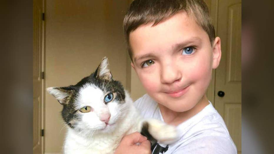 Boy finds rescue cat with same rare condition