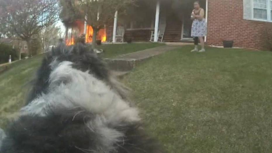 Police officer rescues dog from house fire in Virginia