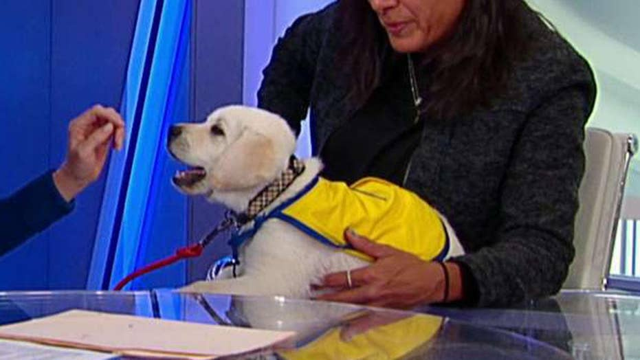 'The Daily Briefing' exclusive: Spike the service dog