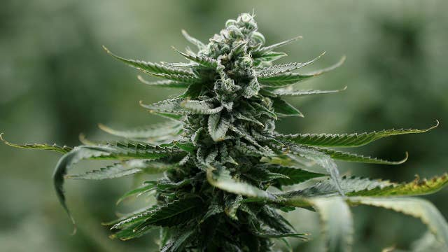 Power problem with pot plants high electric bill