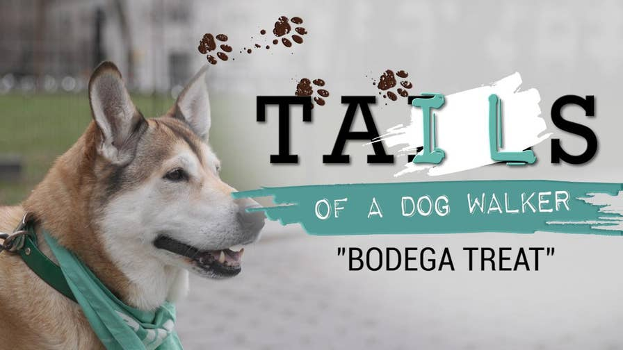 """Often the unsung heroes of neighborhoods nationwide, there are over 28,500 dog walkers in United States. FOX News hit the streets with some of the best walkers in the business to hear some of the funniest, strangest and down-right silly stories in a web series, """"Tails of a Dog Walker."""" In this episode meet Biscuit, a dog who refuses to budge unless he gets a treat."""